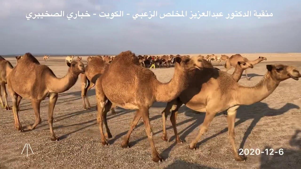 منقية الدكتور عبدالعزيز المخلص الزعبي الكويت خباري الصخيبري